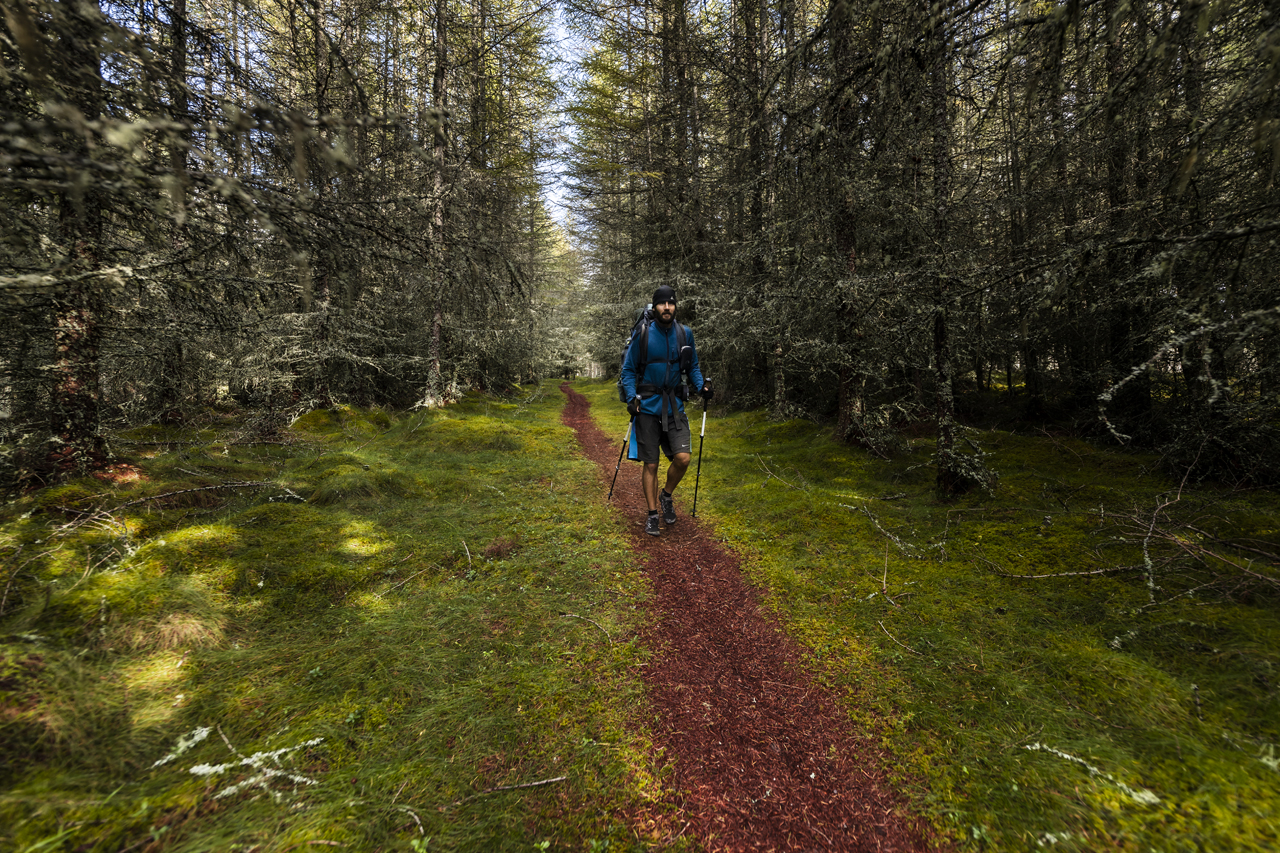 Hiking through Scotish Forest (A47)