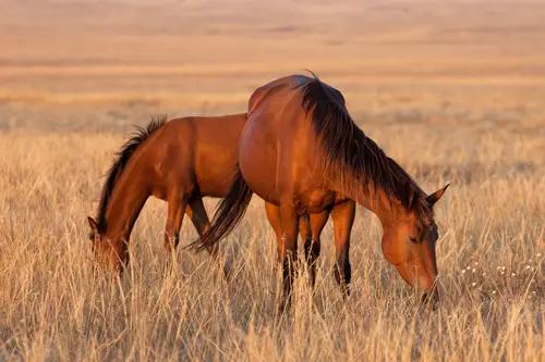 Sommer...Worauf müssen wir bei unseren Pferden achten?