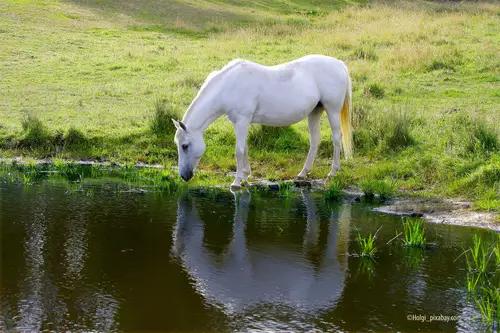 Ausleiten bei Pferden