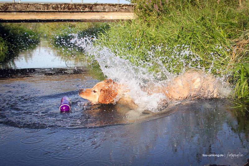 Sabu,  die Wasserratte