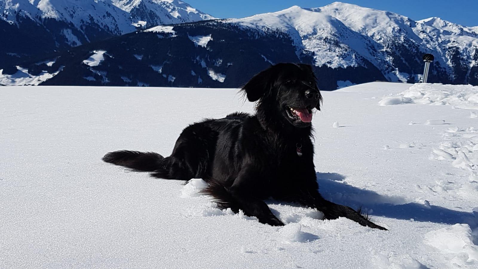 Urlaub Zillertal 2019 , Schnee mein Element
