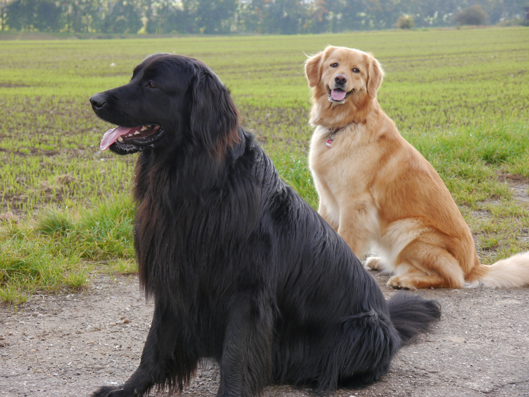 ein schönes Paar