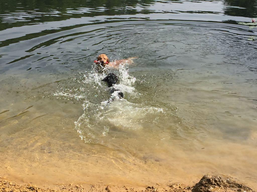 die erste Schwimmstunde in tiefen Gewässer