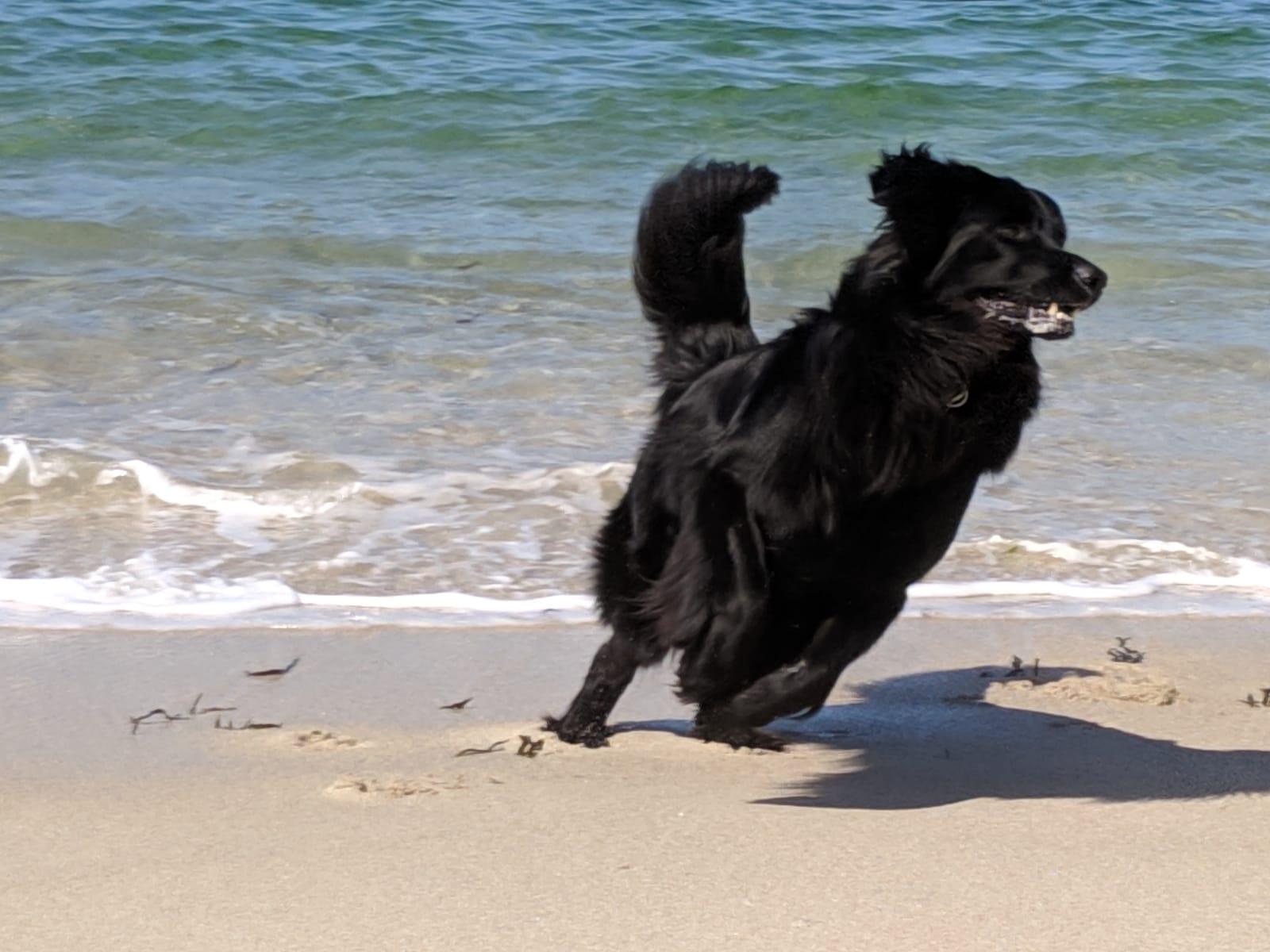 Aragon zeigt seine Urlaubsfreude am Strand in der Bretange