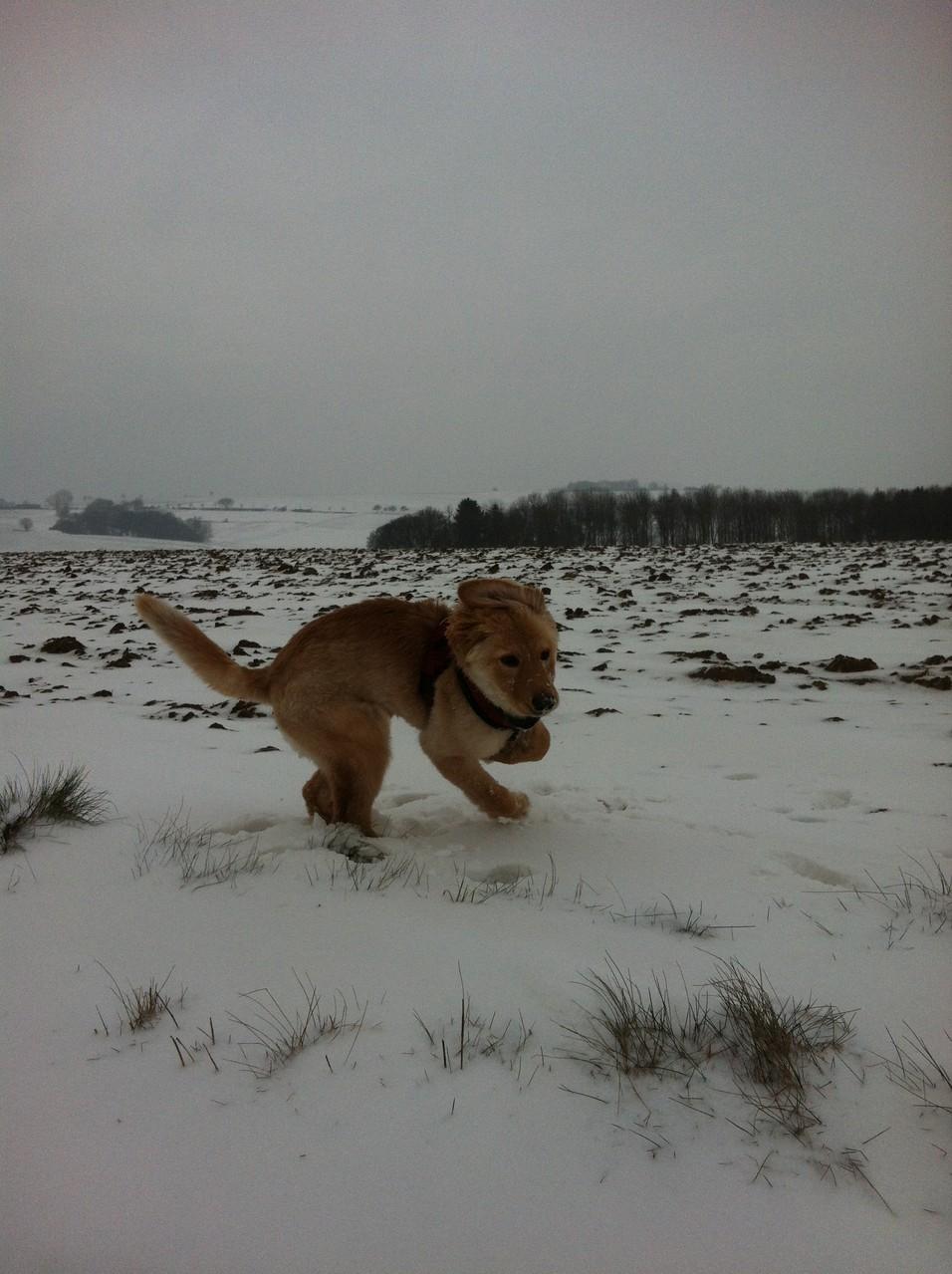 der erste Schnee für Sabu