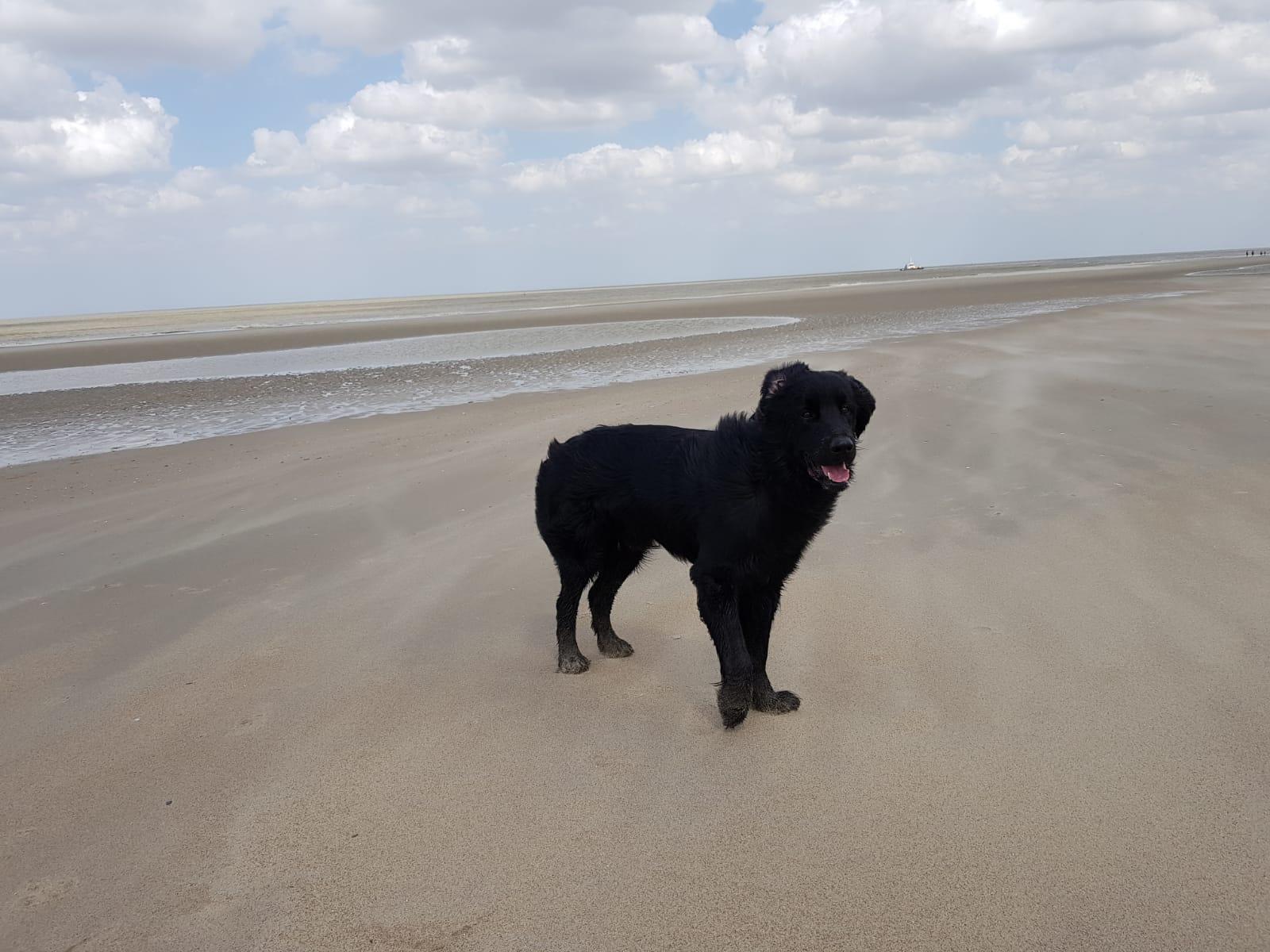 Artos der Strandgänger  grüsst aus Belgien