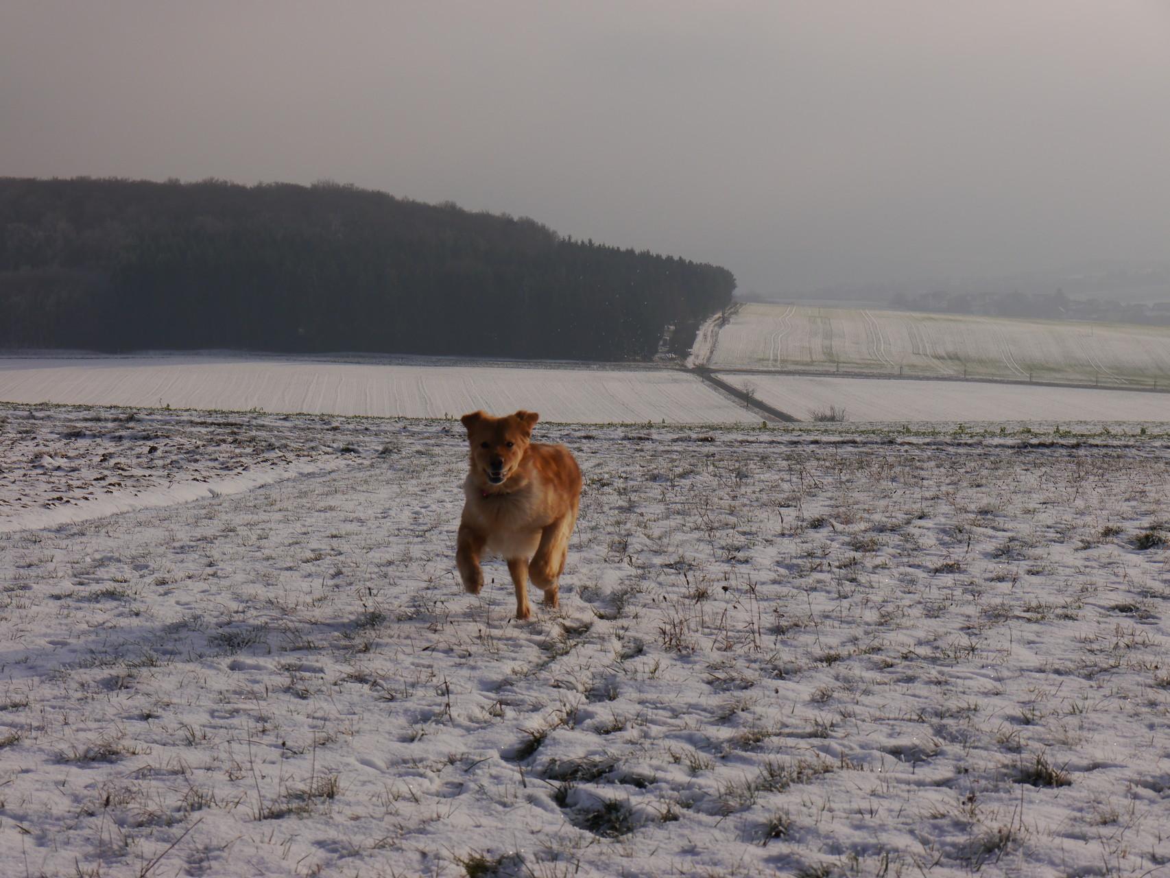 hier und da ist wenigstens Schnee zu finden, wenn auch nur dünn