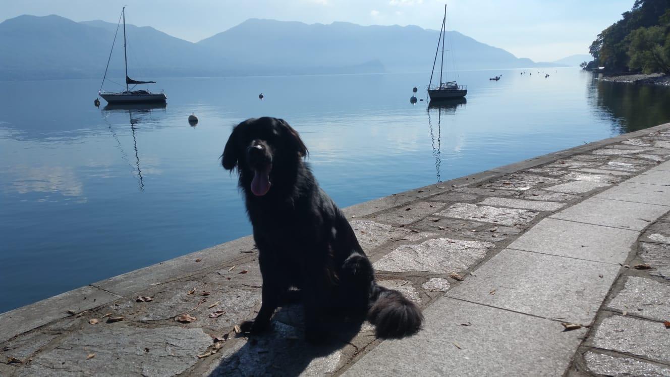Artos grüßt vom Lago Maggiore