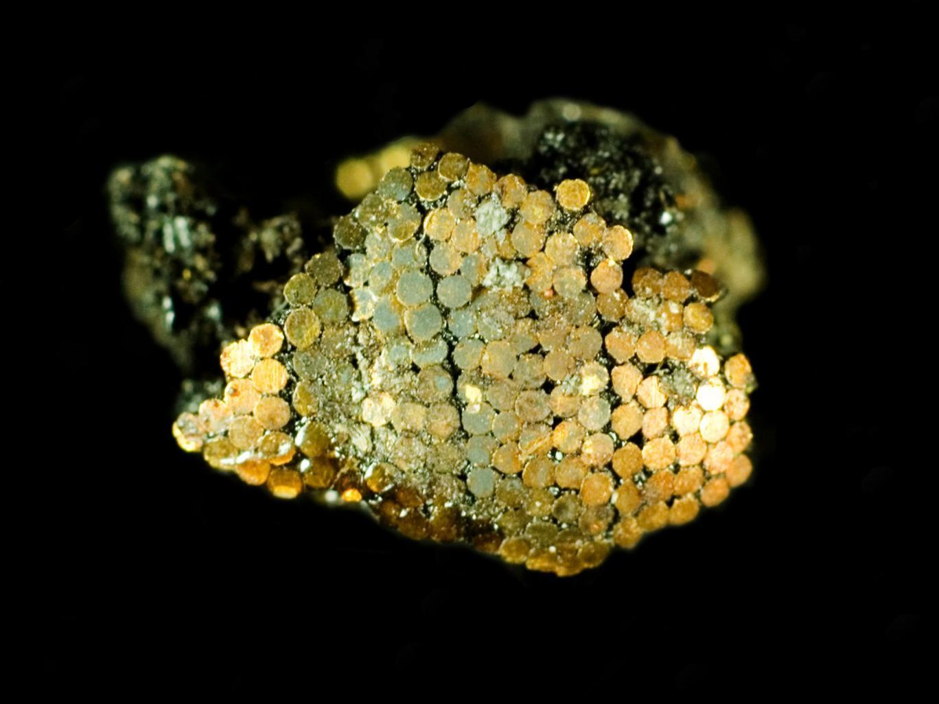 Mikroskopische Ansicht des Griffs mit den winzigen Goldnägeln, Quelle: The Independent