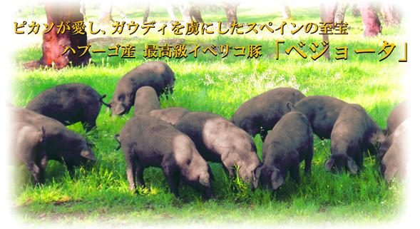 イベリコ豚とは?
