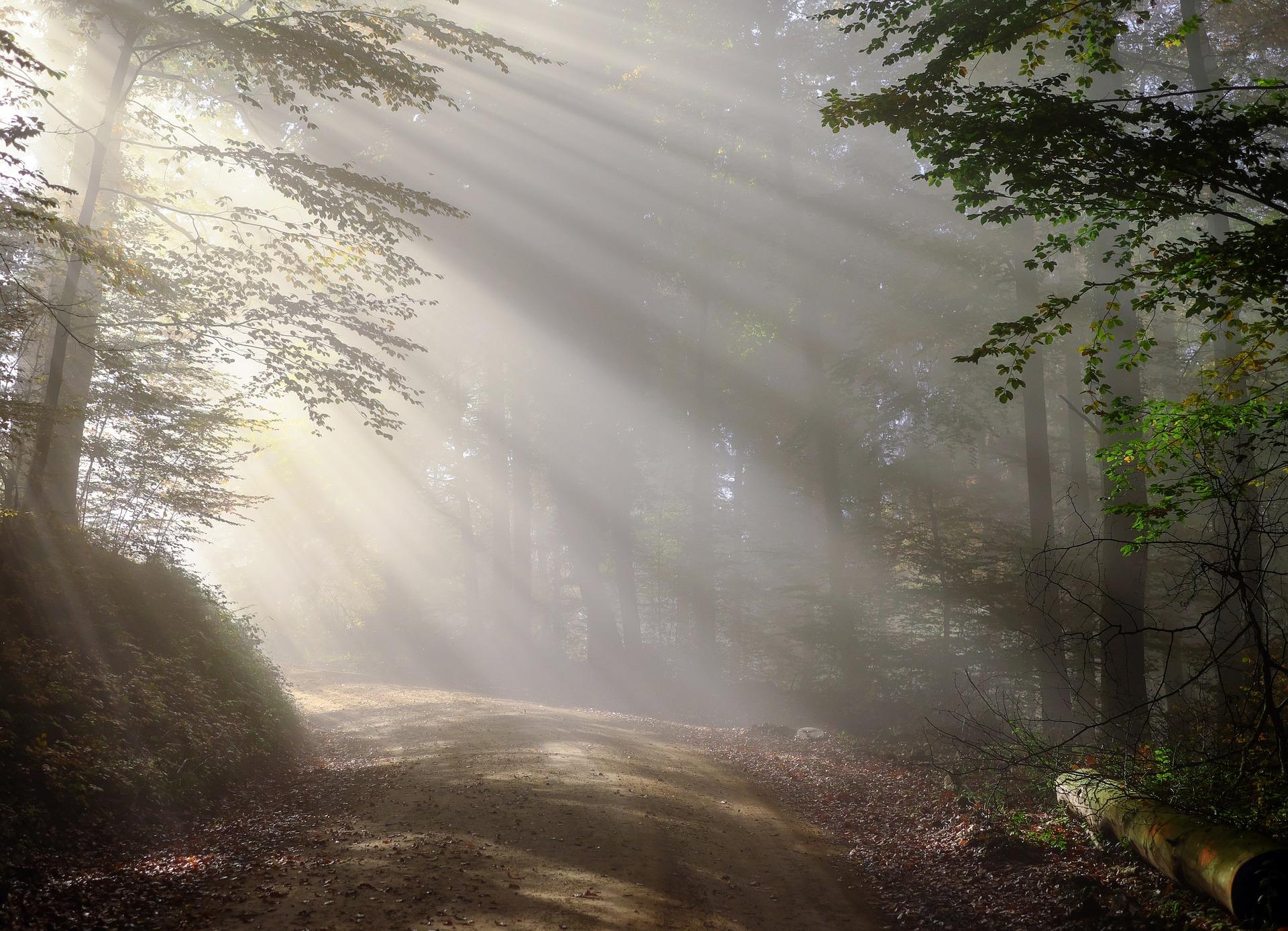 Lichterspiele im Wald
