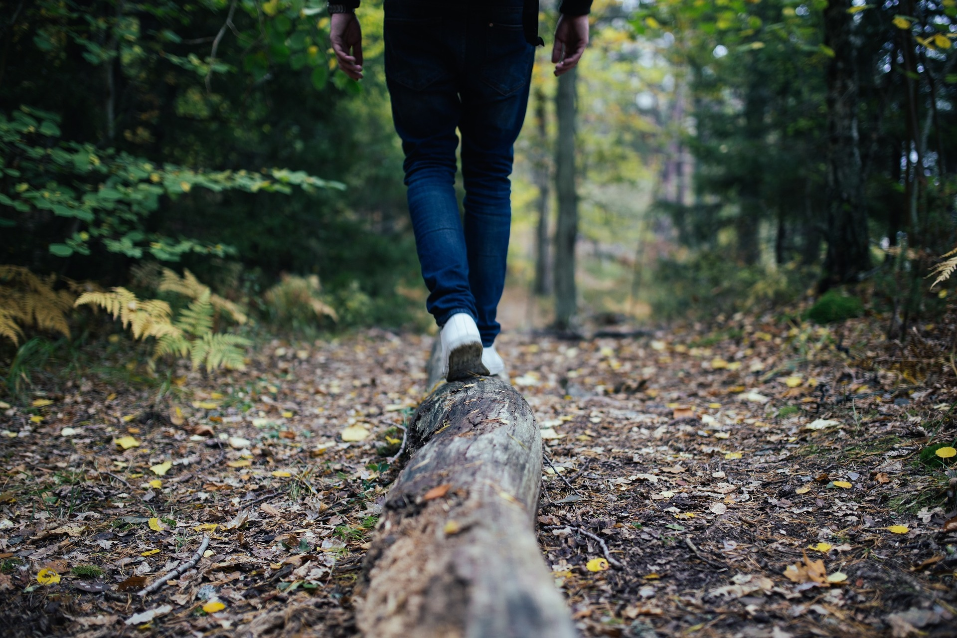In der Natur wandern und zu den Wurzeln zurückkehren