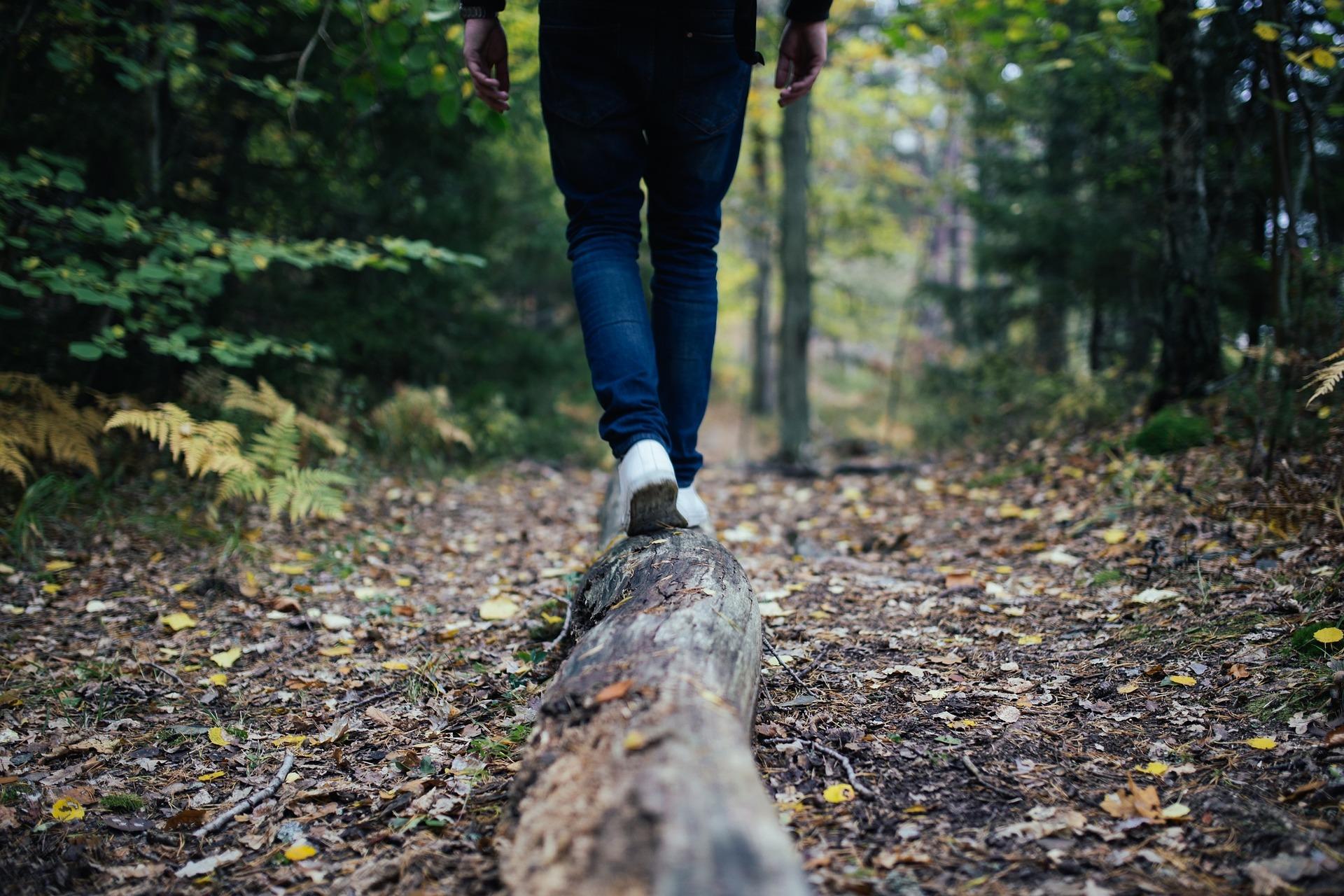 In der Natur wandern und zu den Wurzeln zurück kehren