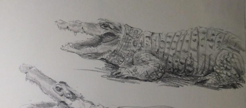 Crocodiles du parc de la Tête d'Or