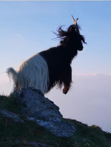 20. Juli 2019 Hendria geniesst die Bergluft.                       Danke Michi für das tolle Foto