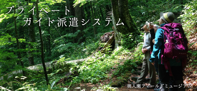 奥入瀬渓流プライベートツアー