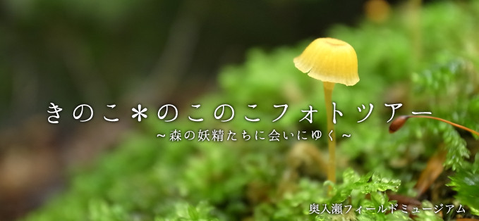 奥入瀬渓流きのこツアー