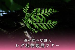 奥入瀬渓流シダ鑑賞ツアー