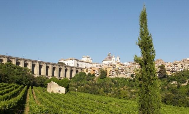 Vista delle vigne con sfondo sul ponte monumentale.