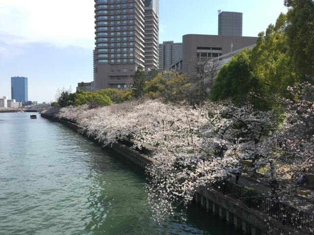 夜桜と昼の桜
