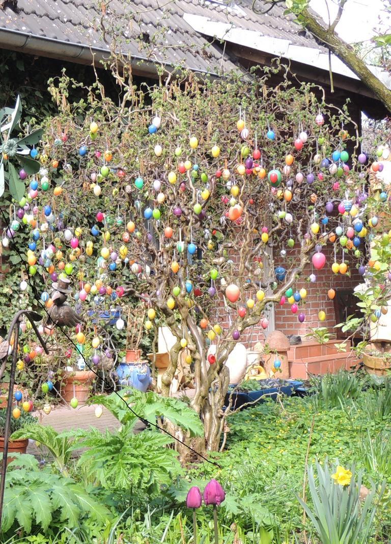 Wie viele Eier mögen wohl an diesem Baum hängen?