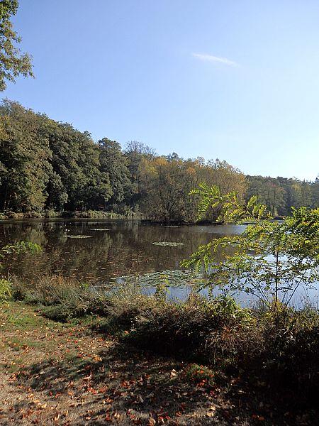 Wunderbarer Platz für Qi Gong: Teich im Loccumer Klosterwald