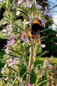 Zu einem insektenfreundlichen Garten zählt auch eine insektenfreundliche Beleuchtung
