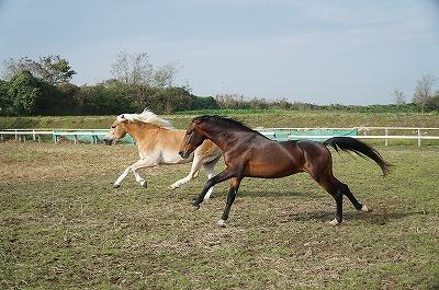 馬たちの猛ダッシュ