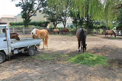 幸せな馬の姿