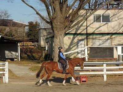 乗馬は馬の気持ちが大切