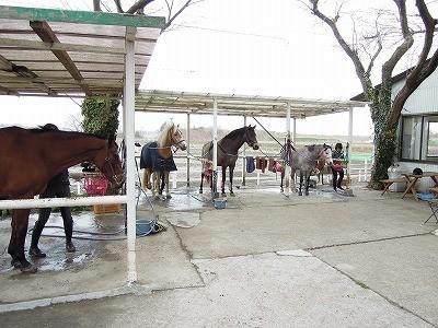 寒い日も馬といれば暖かい