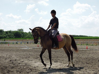 よく調教された馬のいる乗馬クラブ