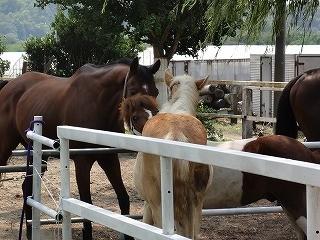 良い馬を体験できる乗馬クラブ♪
