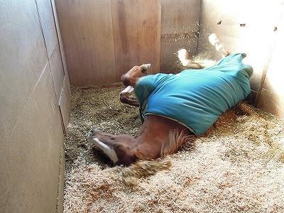 馬の砂浴びならぬおが浴び