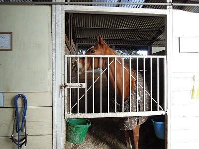 乗馬は馬のいろんな表情が見れるよ