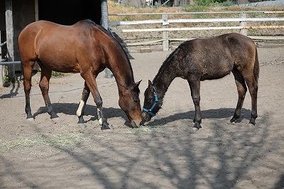 馬は群れで生活する動物