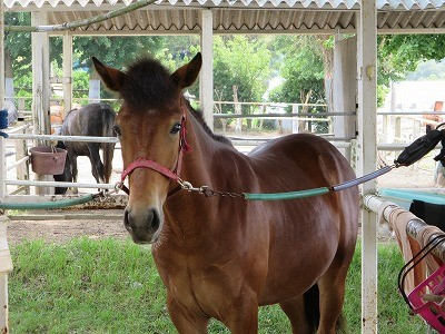 新馬調教の方法