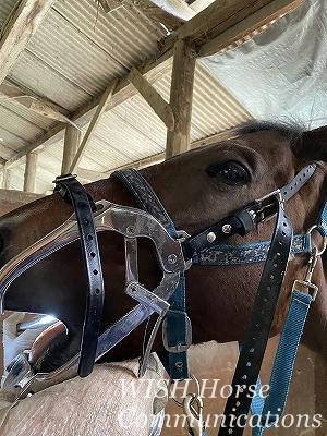 馬の歯医者さん