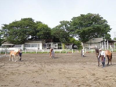 馬の調馬索練習会風景