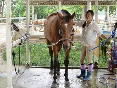 良い馬を作る