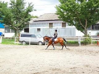 乗馬は馬とのコミュニケーションが楽しい