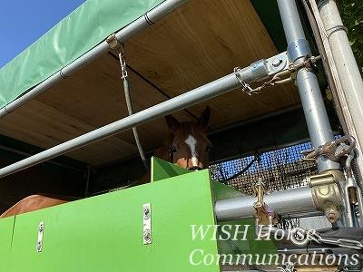 馬運車調教