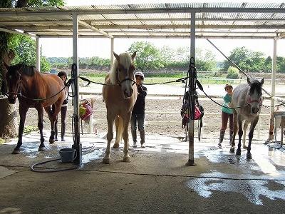 馬と人との良い関係
