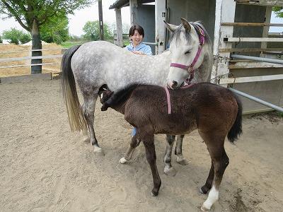 馬と仲良くなる馬術を極める