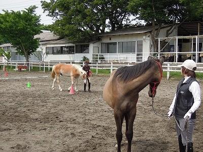 馬の調馬索講座と練習会開催