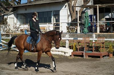 馬の喜びとやりがい