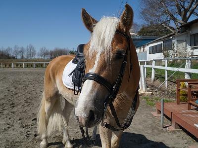 乗馬は馬の健康から