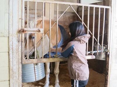 体験乗馬で馬のエサやり体験