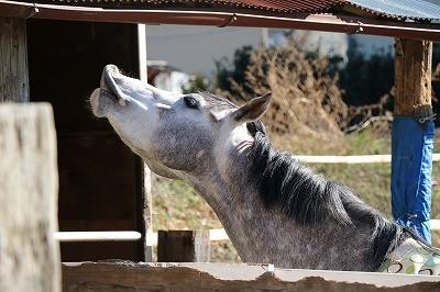 可愛い馬のしぐさ