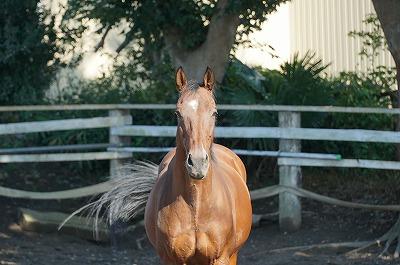 馬とは信頼関係があってこそ